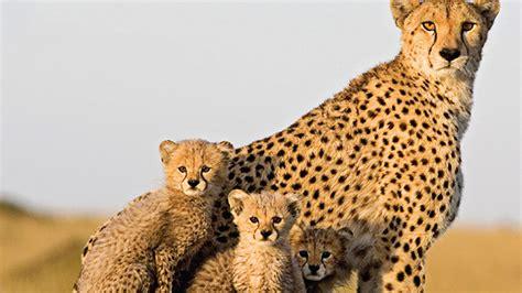 191 hay algo mas rapido que un guepardo liverpool es parte de mi vida estecieloverde