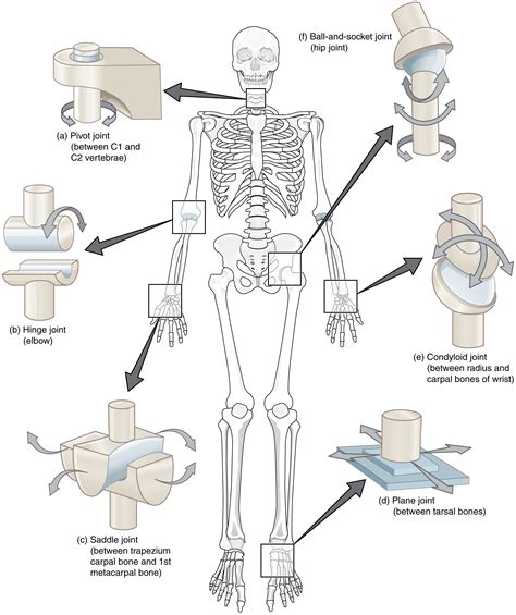 joint design definition synovial joints 183 anatomy and physiology