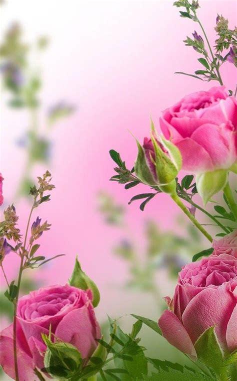 imagenes de whatsapp de flores las 25 mejores ideas sobre flores para whatsapp en