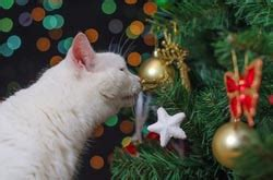 are christmas trees poisonous to cats the cat coach plants and cats