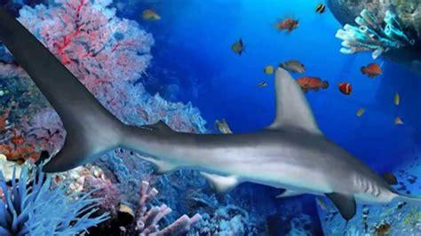 imagenes de unicornios marinos fondos marinos youtube