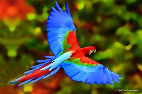 colorful parrots pix for gt colorful parrots flying colors colors
