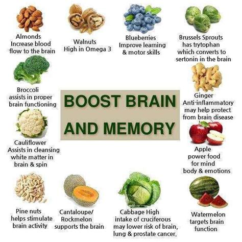 how to feed a brain nutrition for optimal brain function and repair books image gallery health tips