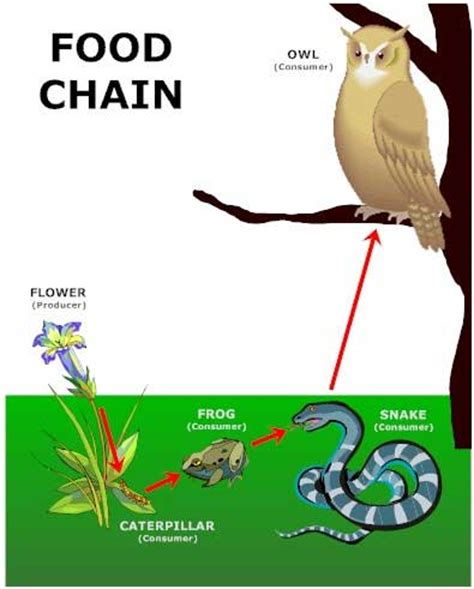 Backyard Food Chain by Bookish Ways In Math And Science Unit Resource Portfolio