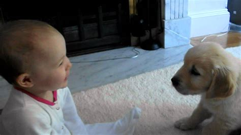 puppy with baby baby and puppy meet for the time