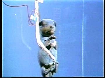 dead puppies aren t much embryo 1974 triskaidekafiles