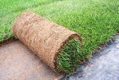 tappeto erba vera noleggio tappeto erba vera a