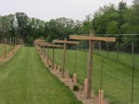 vine trellis systems bluff vineyard completing the geneva curtain