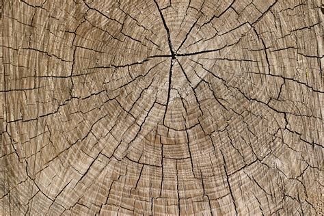 tree ring 34 tree ring textures photoshop textures patterns