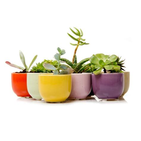 How To Propagate Cacti Succulents Apartment Therapy - 62 best diy succulents images on apartment