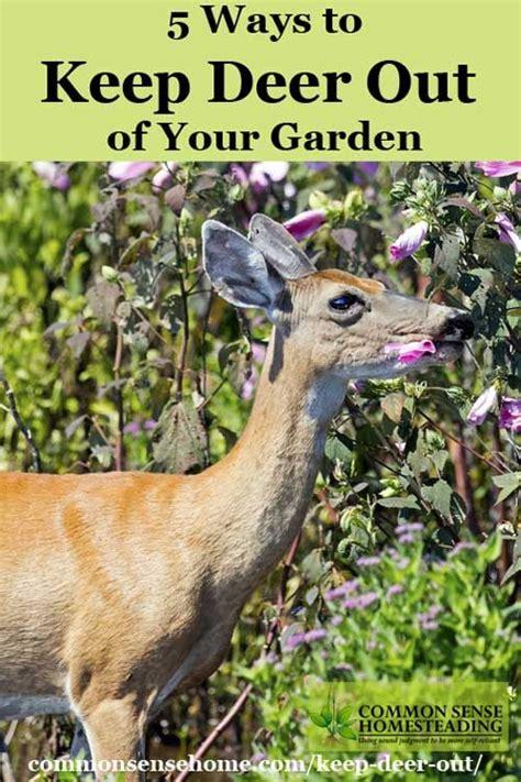 Keep Deer Out Of Vegetable Garden Gardens Deer And Yards On