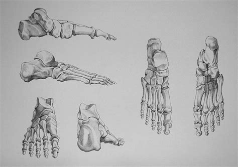 foot bones video lesson presented in the drawing academy