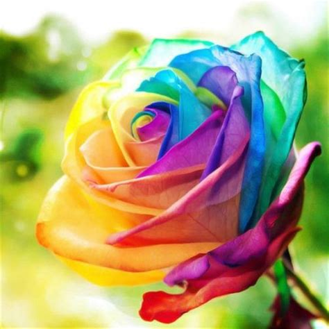 colorful roses favorable 200pcs rainbow seeds flower perennial