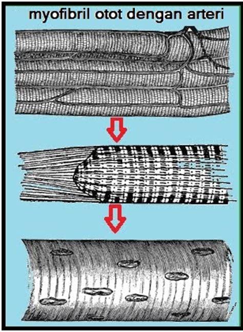 Yuk Mengenal Anggota Tubuh Fungsinya Sc variasi kerja otot beriman berilmu berakal