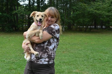 can golden retrievers stay in apartments foster a golden golden retriever rescue of southern maryland