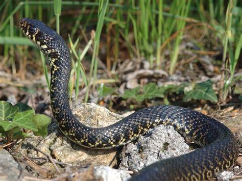 animali da casa come allontanare i serpenti da casa