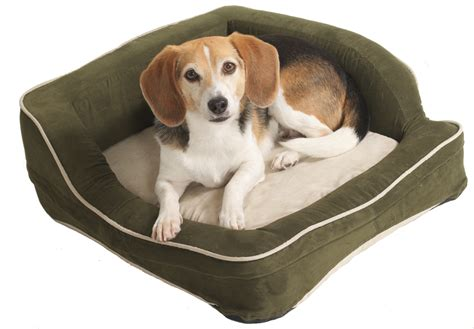 dog on bed 4 scary things in your dog s bed can be harmful to your