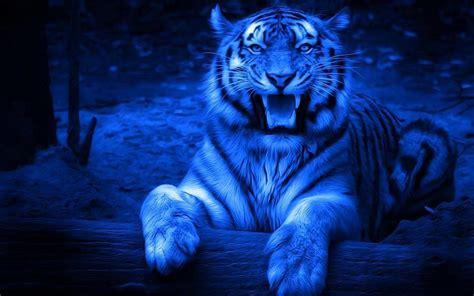imagenes de tigres cool fond ecran tigre 3d fonds d 233 cran hd