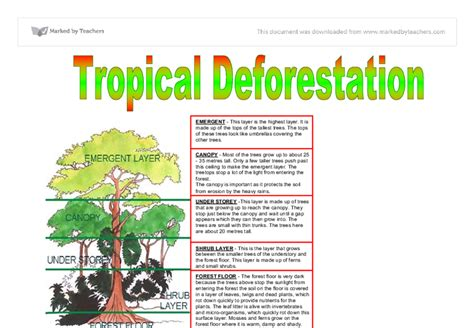 Causes And Effect Of Deforestation Essay by Essay Deforestation Essays On Deforestation Cause And