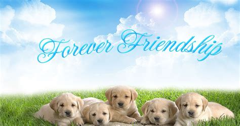 wallpaper cute friendship love quotes friendship day wallpapers friendship day pics