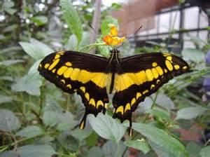 jardin des papillons hunawihr les avis sur jardin des