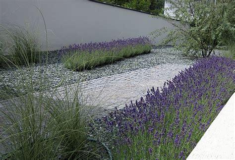 vorgarten mit gräsern moderner vorgarten mit gr 228 sern kunstrasen garten