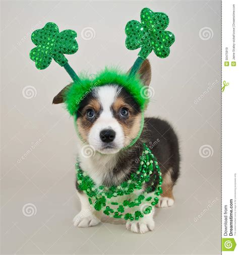 day puppies st s day puppy stock photo image 50475919