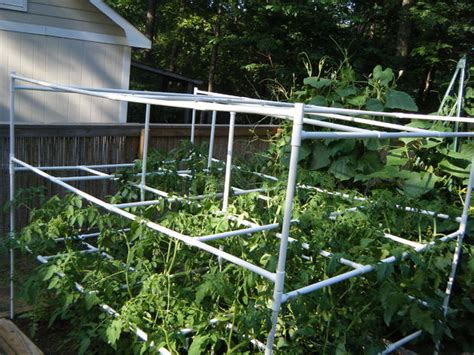 Tomato Rack System by Best Diy Pvc Pipe Projects