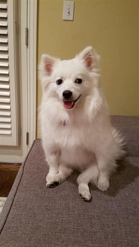 jacksfilms dogs twicopy web viewer