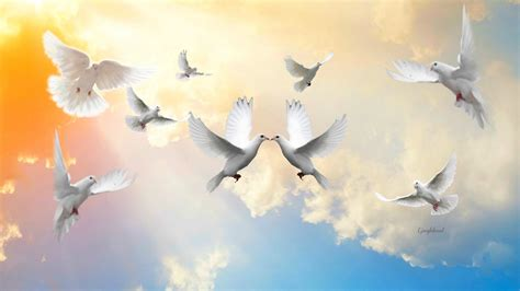 doves hd wallpaper 557370 jpg doves in the sky hd wallpaper