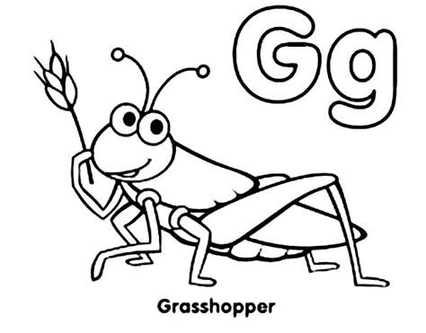preschool grasshopper coloring pages grasshopper drawing clipart panda free clipart images