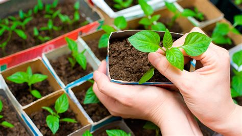 hacer huerto en casa club de jardiner 237 a 191 c 243 mo realizar mi primer huerto en casa
