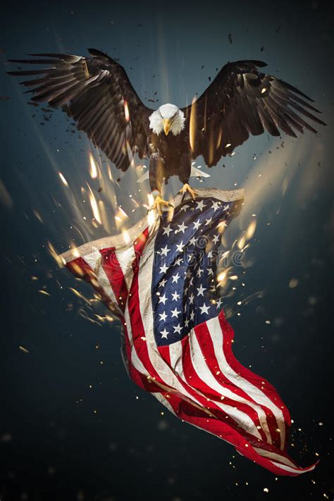 bald eagle  american flag stock illustration