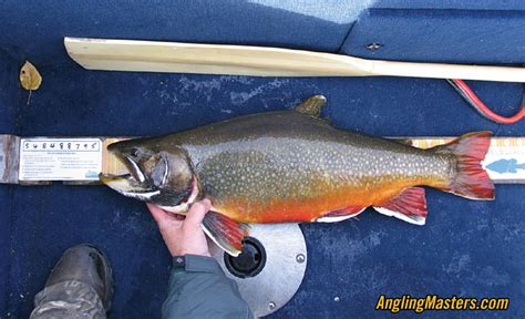 Records Manitoba World Record Brook Trout Www Pixshark Images Galleries With A Bite
