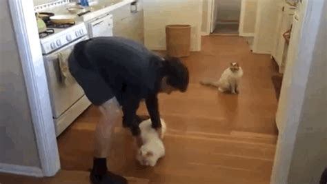 carlton sliding across floor gif this of a cat sliding across the floor proves that