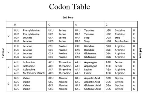 Codon Table by Question 1 Select One Answer 10 Points Which Of T