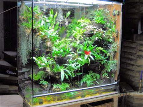orchideen galerie und bromelien farne im tropenterrarium