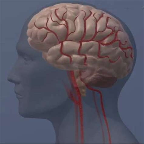mood swings after head injury traumatic brain injuries may be helped with drug used to