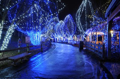 columbus zoo lights columbus zoo aquarium visit grove city