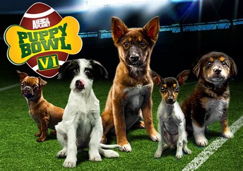 animal planet puppy bowl subaru prefers puppy bowl to bowl offers free pet treats on