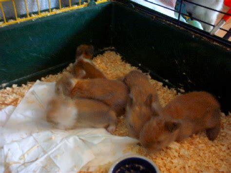 wir suchen ein zuhause hasen kaninchen tieranzeigen seite 81