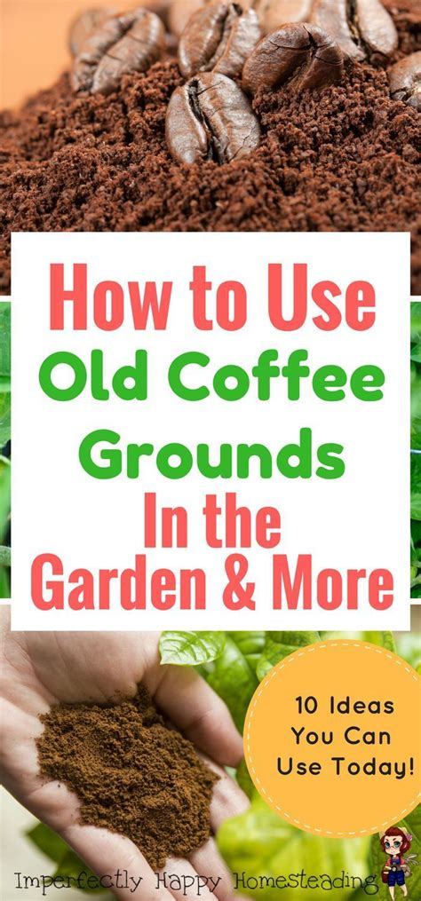 Coffee Grounds In Garden by How To Use Coffee Grounds In The Garden More Great