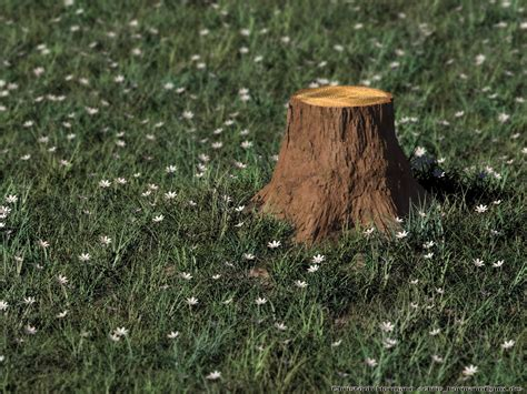 wood stump imagico de raytracing gallery 5