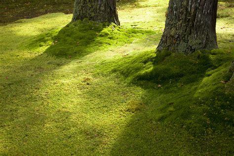 how to grow kyoto moss spores ebay