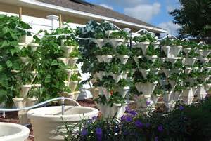 Farming In Your Backyard - backyard food solutionsbackyard food solutions local hydroponic produce delivery servicing