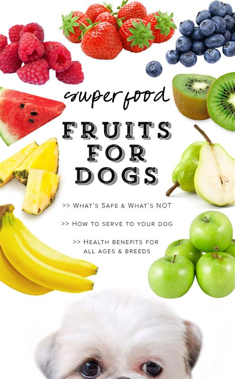 are strawberries safe for dogs 10 superfood fruits for dogs what s safe what s not pretty fluffy