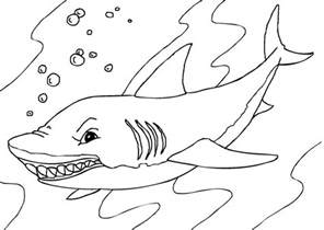 print color pages printable shark coloring pages coloring me
