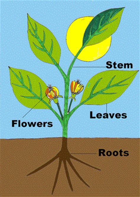 roots the most important part of your plant grow easy plant parts and cycle thinglink