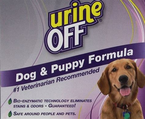 how to get rid of dog urine smell in house dog urine smell