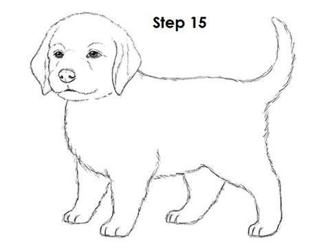 drawing of a puppy how to draw a puppy